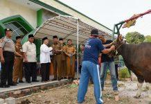 Plt Gubernur Kepri Isdianto menyerahkan sapi, hewan kurban di Masjid Agung Al Hikmah Tanjungpinang, Kota Tanjungpinang, Senin (12/8). FOTO:SURYAKEPRI.COM/IST