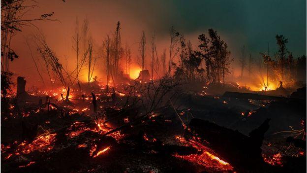 Kebakaran Hutan (Sumber: BBC)