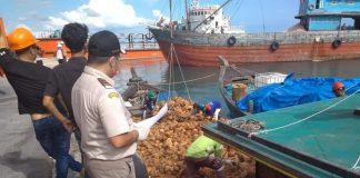 Petugas Karantina Pertanian Tanjunpinang saat memeriksa bahan baku kelapa PT. Bionesia Organic Foods, Lobam, Bintan (Suryakepri.com/istimewa)