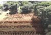 Lubang kubur berjajar di sebuah pemakaman umum di Brasil. Ini adala negeri Amerika Latin yang paling terpukul akibat wabah Covid-19. (Foto: Capture video BBC)