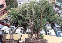 Pohon tumbang menimpa mobil di Benggala, India, akibat Topan Amphan, Kamis (21/5/2020). Foto: Indian Ex