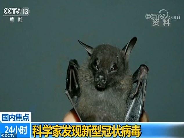 Tangkapan layar video CCTV mengenai penemuan virus corona baru di Laboratorium Wuhan China