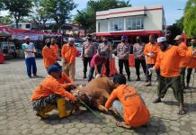 Pelaksanaan penyembelihan hewan kurban di Mapolres Tanjungpinang (Suryakepri.com)