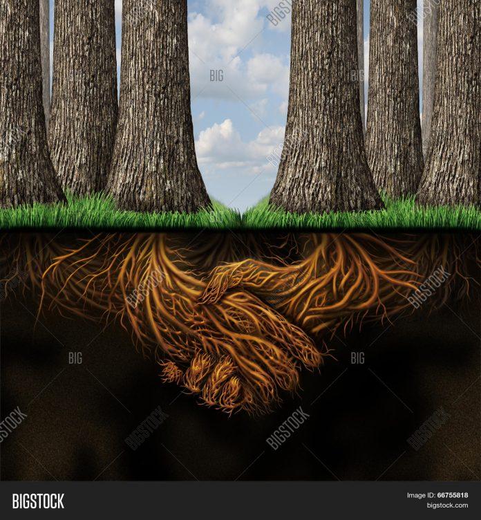 Ilustrasi kerjasama antara akar pohon di dalam tanah.
