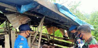 Lanud Hang Nadim Tertibkan KKOP, Ada Ternak Babi Disekitar Landasan Pacu Pesawat