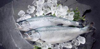 Ikan Salmon diduga membawa virus corona kembali masuk China melalui impor.