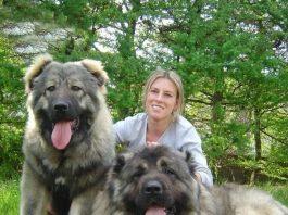 Anjing Gembala Kaukasia atau Kaukasia Ovcharka, anjing pemburu serigala dan beruang di Rusia. (Foto: animalso.com)