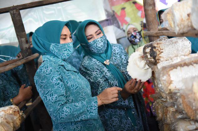 Sofha Marwah Bahtiar Kunjungi Rumah Budidaya Jamur - Surya ...