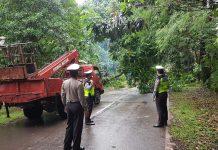 Pohon-pohon tua di jalan jalur lambat Sukatjadi, Batam