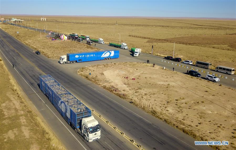 Foto yang diambil pada 22 Oktober 2020 menunjukkan truk-truk pengangkut domba yang disumbangkan oleh Mongolia di Erenhot, Daerah Otonomi Mongolia Dalam, Tiongkok utara. (Xinhua / Peng Yuan)