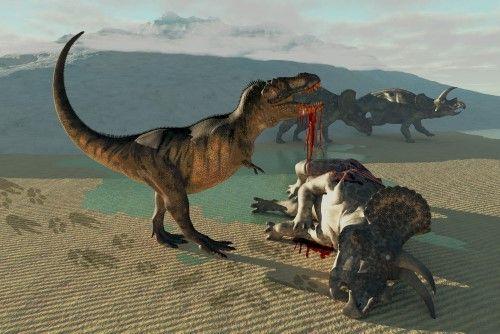 Perkelahian brutal T-Rex dan Triceratops. Perkelahian dua spesies dinosaurus ini tergambar pada fosil mereka yang masih utuh dan dipamerkan di North Carolina Museum of Natural Sciences.