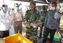 Komandan Lantamal (Danlantamal) IV Laksamana Pertama TNI Indarto Budiarto saat menunjukkan ikan kerapu yang dipanen (Suryakepri.com)