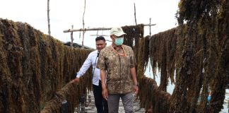 Budidaya rumput laut.