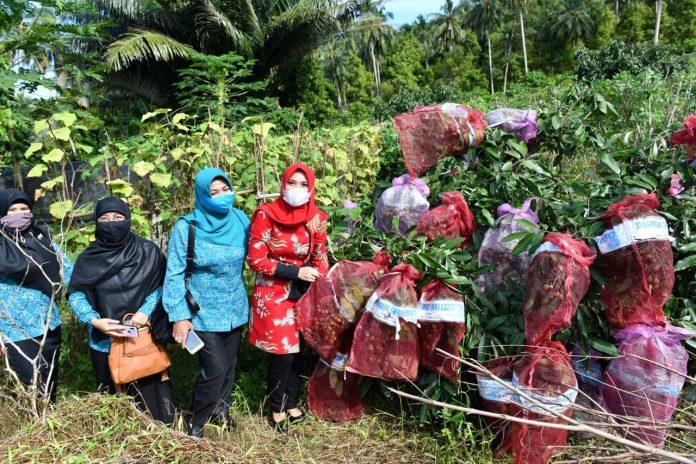 Pjs Ketua TP PKK Kepri Sofha Marwah Bahtiar melakukan peninjauan kegiatan TP PKK Kabupaten Kepulauan Anambas, khususnya di Desa Tiangau, Siantan Selatan, yang menjadi pusat pembudidayaan pohon pala.