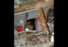 Anak kecil terjebak di bawah reruntuhan gedung yang runtuh akibat gempa bumi 6,1 SR yang mengguncang Majene, Sulawesi Barat, Jumat (15/1/2021)dinihari.