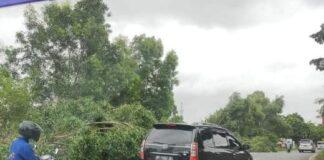 Hujan dan angin kencang disertai hujan yang melanda Kota Batam mengakibatkan pohon tumbang di Jalan Seraya, Batuampar,