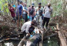 Kapolsek Bintan Utara Kompol Arbaridi Jumhur saat turun ke lokasi melihat korban saat ditemukan tak bernyawa (Suryakepri.com/ist)