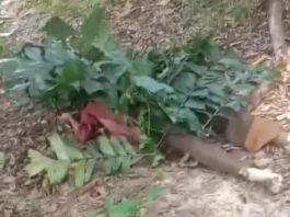 Foto Dayat (68), ditemukan warga tidak bernyawa dalam hutan DAM Duriangkang, Sei Beduk, Rabu (3/2/2021) sekitar pukul 14.00 WIB.