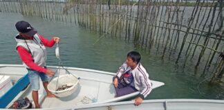 Foto pengepul ikan kawasan perairan Pulau Kasu, Belakangpadang, Rabu (10/2/2021).