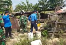 Pembersihan ternak hewan babi di kawasan Hang Nadim Batam, Selasa (16/02/2021)