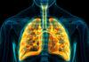 Ilustrasi: Sistem pernapasan manusia (magicmine; iStock oleh Getty Images)