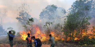 foto kebakaran hutan di nongsa