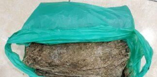 Foto Barang Bukti ganja seberat 1,2 kg