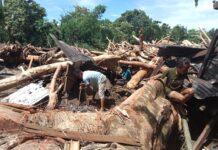 Warga di sebuah wilayah dekat Desa Lipang, Alor Barat Laut, berupaya menggali di bekas rumahnya yang sudah hilang tersapu banjir akibat badai siklon tropi Seroja. Batang pohon-pohon besar memenuhi area yang tadinya merupakan permukiman. Tak satupun rumah masih berdiri di lokasi ini. (Foto Istimewa/via WA)