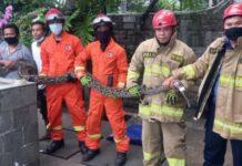 Damkar evakuasi ular sanca 5 meter dari sebuah rumah di Jaktim (detik.com)