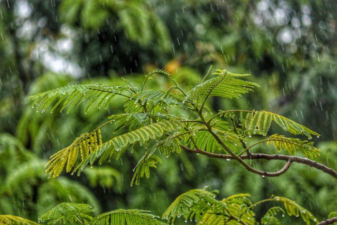 Hujan (unsplash.com)