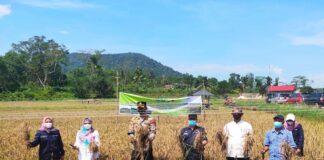 Kegiatan panen padi bersama Kapolres Bintan, Selasa (27/04/2021)