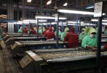Ilustrasi karyawan pabrik Dua Kelinci di Pati/ Foto: Media Indonesia