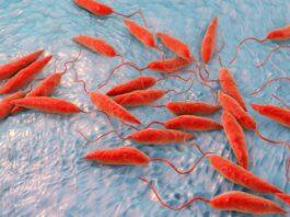 Leishmania sp. protozoa, ilustrasi komputer. Parasit ini menyebabkan penyakit tropis leishmaniasis. Kredit: Kateryna Kon Alamy