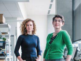 Pengembang vaksin Lexi Walls (kiri) dan Brooke Fiala ( kanan ) menggunakan protein yang dibuat khusus untuk membuat inokulasi COVID baru yang menjanjikan. Ini melambaikan bagian yang rentan dari virus SARS-CoV-2 di depan sel sistem kekebalan, memprovokasi respons penetralan yang kuat. (Kredit: Timothy Archibald).