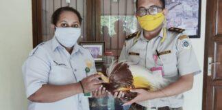 Petugas Gagalkan Penyelundupan Awetan Cenderawasih. ©2021 Antara