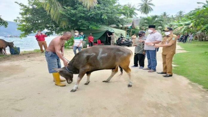 Foto Bupati Bintan Abdul Haris menyerahkan secara simbolis hewan kurban.