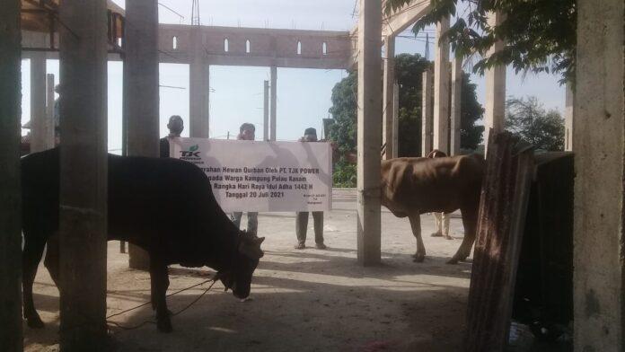 Foto TJK Power menyerahkan hewan kurban kepada warga kampung Teluk Nipah