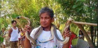Foto Bernardo Alvarez si Manusia Ular dari Filipina bersama ular-ular kobranya.