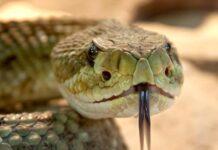 foto ilustrasi ular