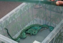 Foto ular
