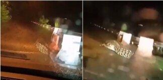 Viral Seekor Buaya Berkeliaran di Tengah Jalan, Bikin Warga Panik (Sumber: Siakapkeli)