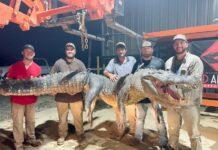 Ty Powell bersama empat rekannya berpose dengan buaya raksasa hasil tangkapan mereka di Sungai Mississippi, AS, Sabtu (4/9/2021). (Foto dari USA Today)