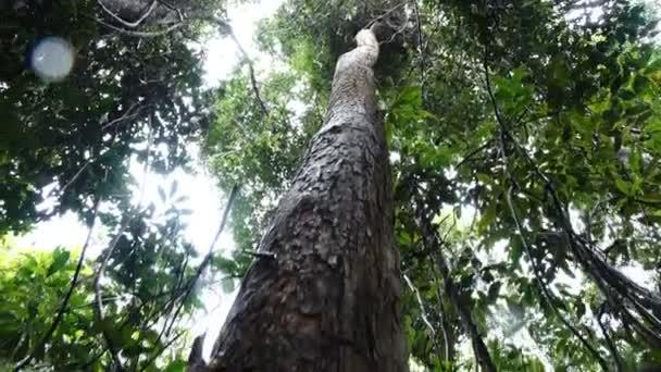 Pohon Rosewood (Dalbergia sissoo) terancam punah.