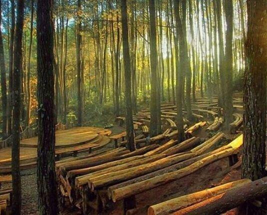 Lokasi wisata Pinus Sari Mangunan yogyakarta